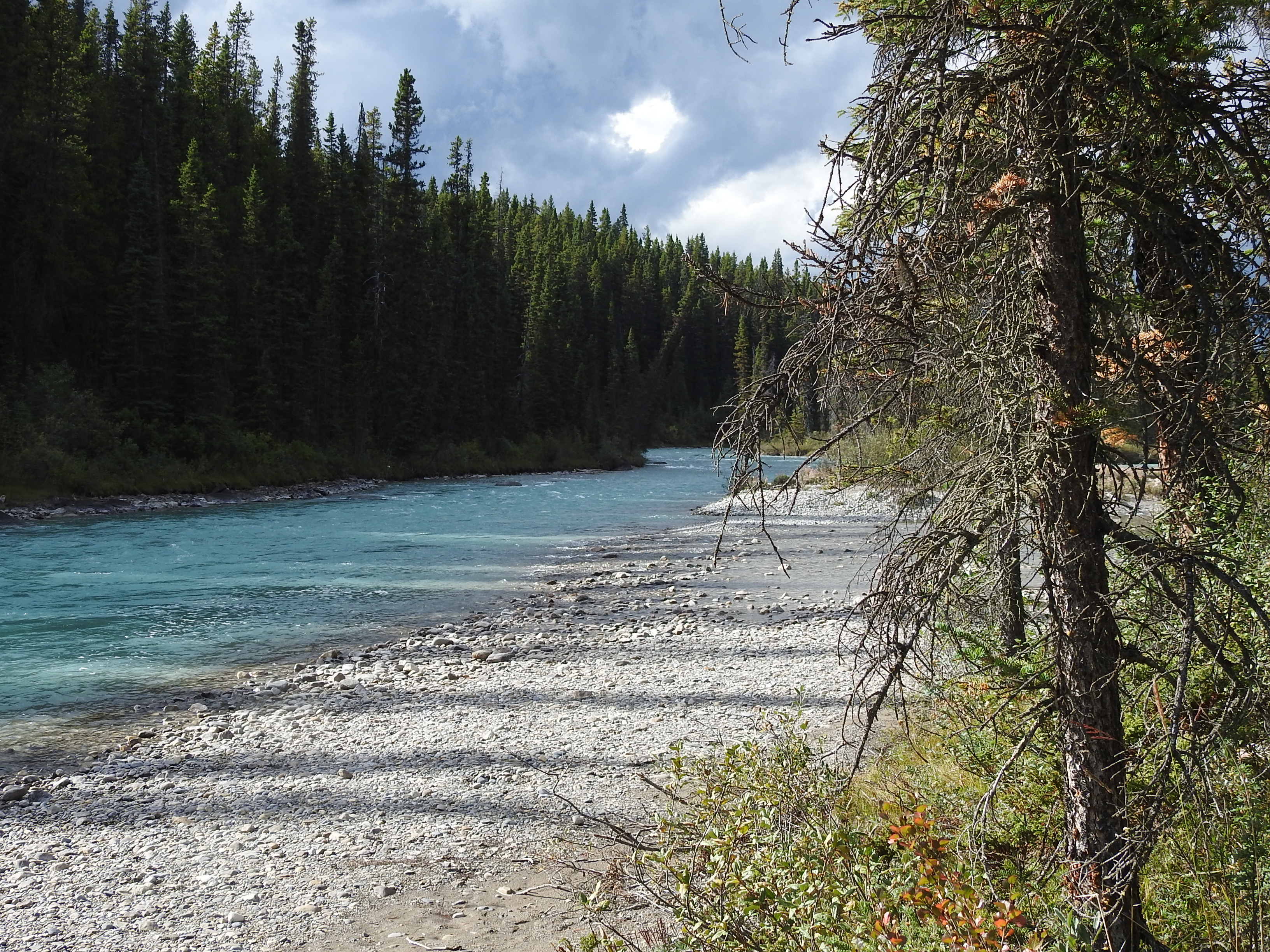 Campground Bow River
