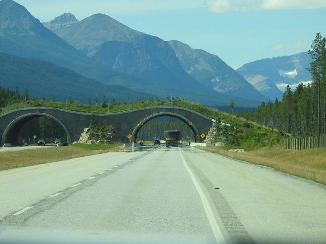 Critter Bridge