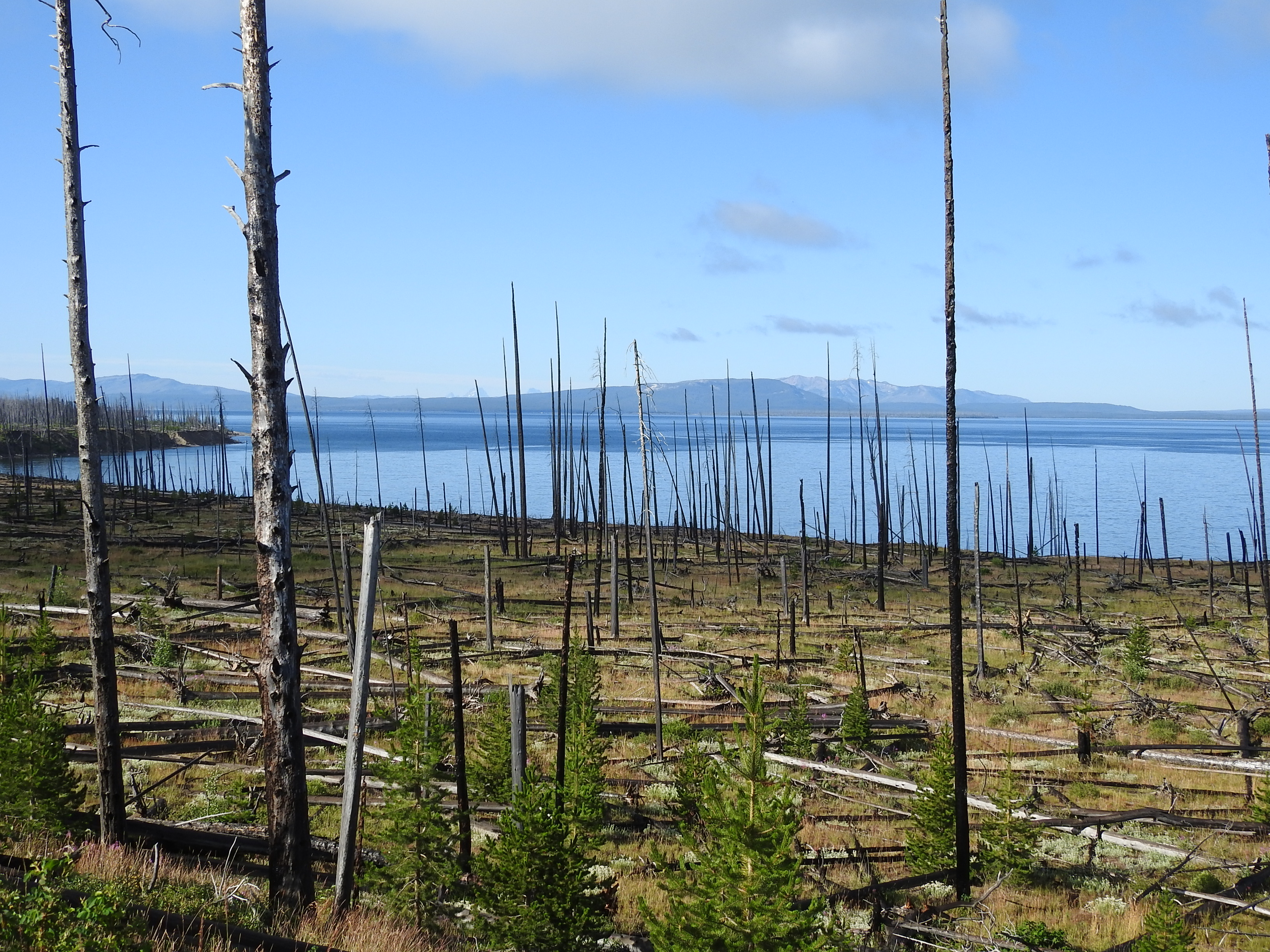 Yellowstone Lake after the Fire.jpg
